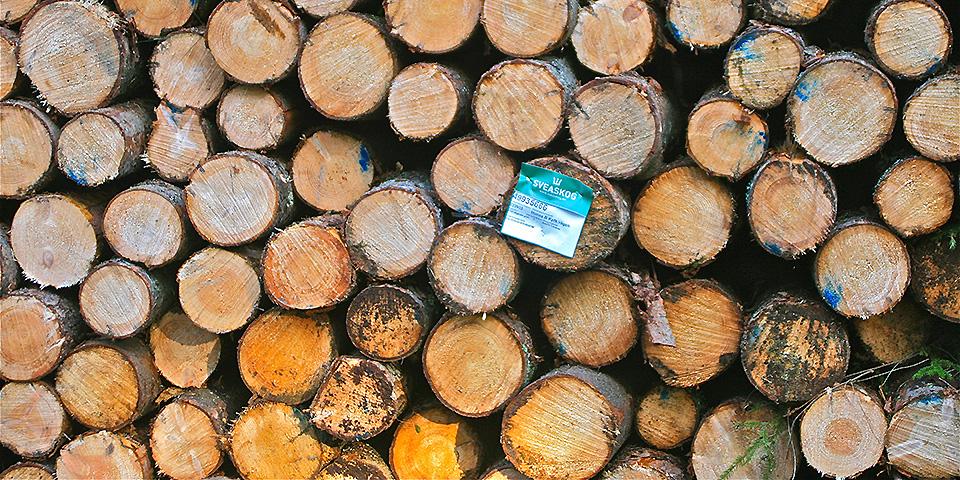 Nachhaltig bauen mit Holz